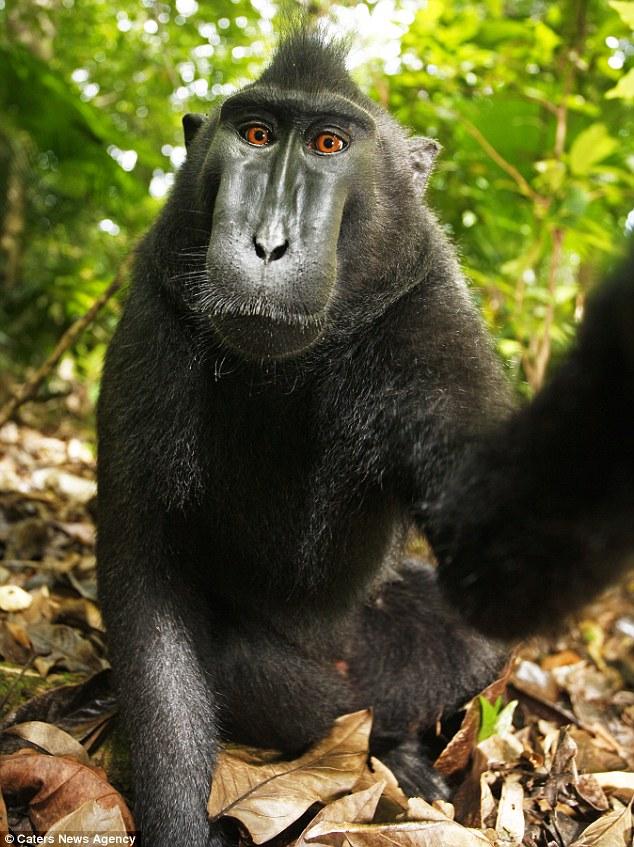 Ritratto di Famiglia Ph: Macaco